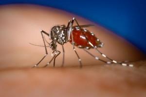 moustique-qui-pique