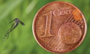 moustique-tigre-taille